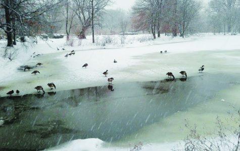Snowy scenes in Boston