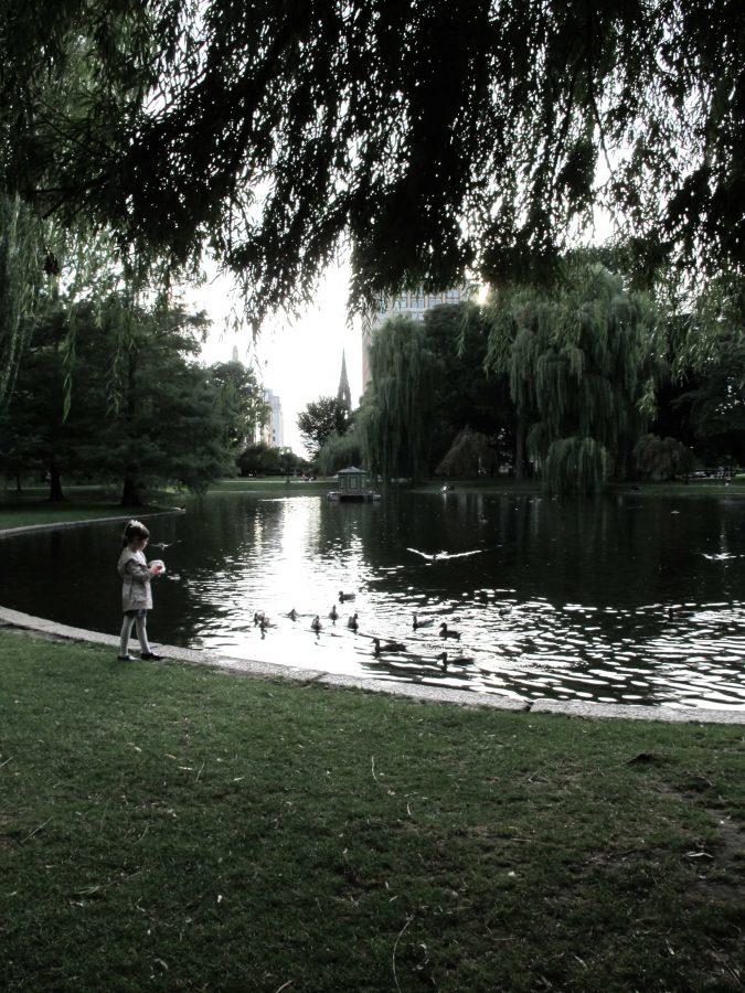 Boston Public Gardens by Christine Gronberg