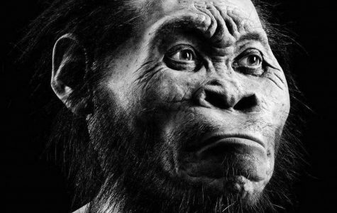 A new branch in human evolution