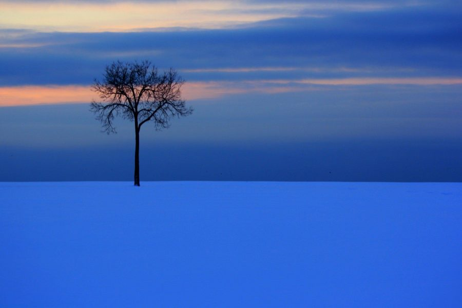 A lone tree in a wide field