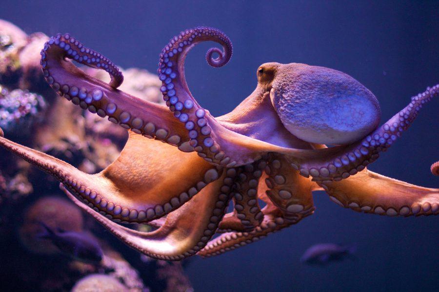 An octopus floating deep in the ocean