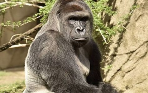 Harambe's code: take better care of your kids and animals