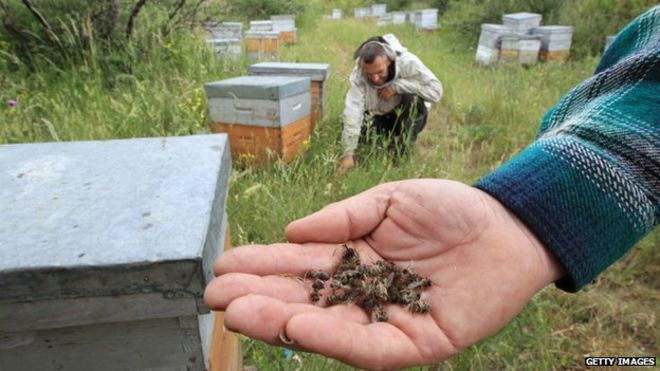 Neonicotinoid pesticide harms bees and crops, leading to spider mite outbreaks