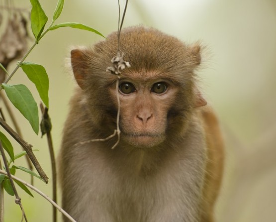 Advancement in rehabilitation for spinal cord injuries in Rhesus monkeys