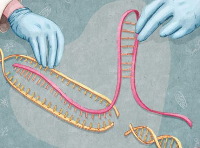 Guidelines emerge regarding human gene editing