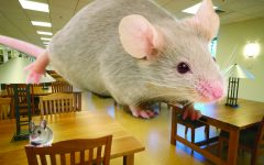 Mice and rats war rages on across Simmons University