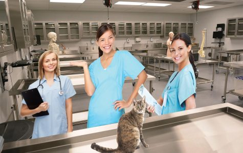 Catastrophe: nursing students accidentally resurrect dead cat