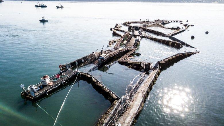 Fish farm collapse threatens coast