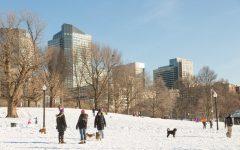 The Shady Shark: I Had No Idea the Heart of Boston Was So Cold
